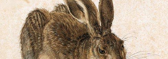 haas van Dürer